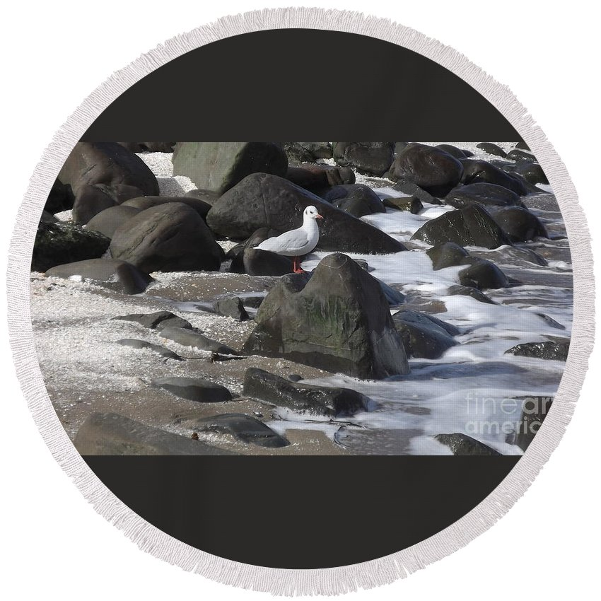 New Quay Round Beach Towel featuring the photograph New Quay Gull 3 by John Williams