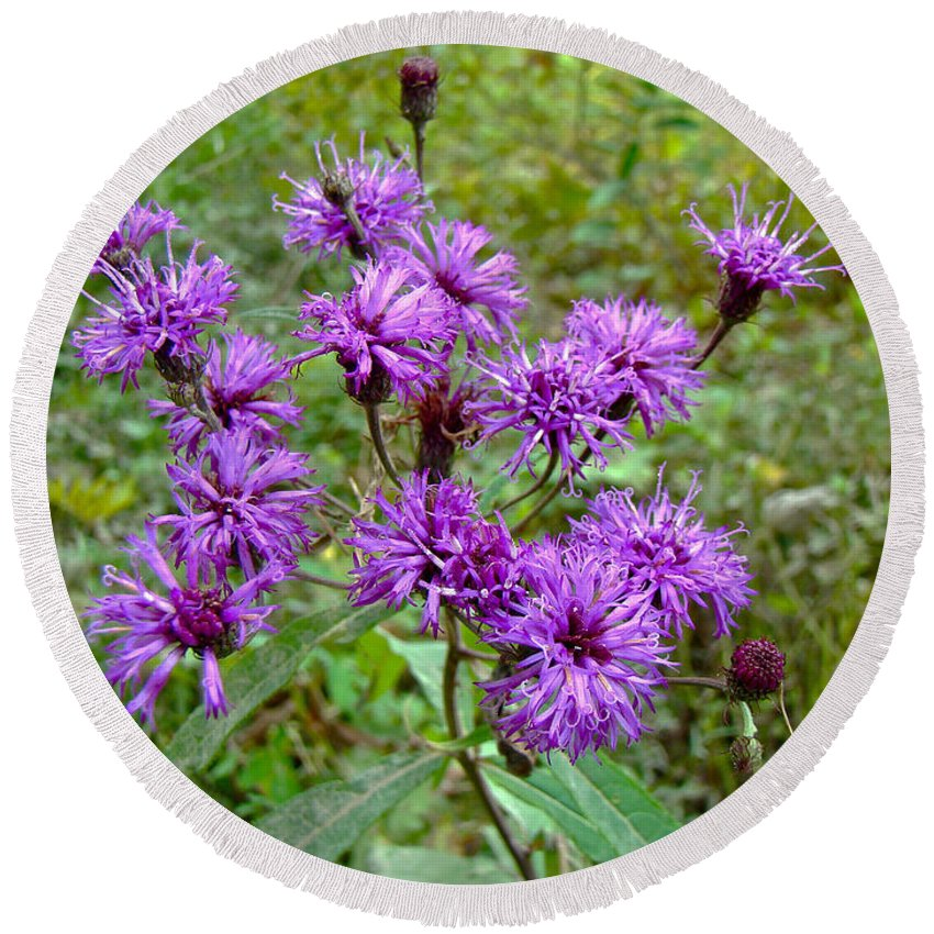 Ironweed Round Beach Towel featuring the photograph New York Ironweed Wildflower - Vernonia Noveboracensis by Mother Nature