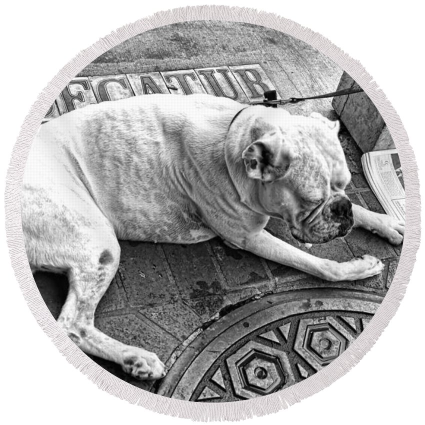 Dog Round Beach Towel featuring the photograph Newsworthy Dog In French Quarter Black And White by Kathleen K Parker