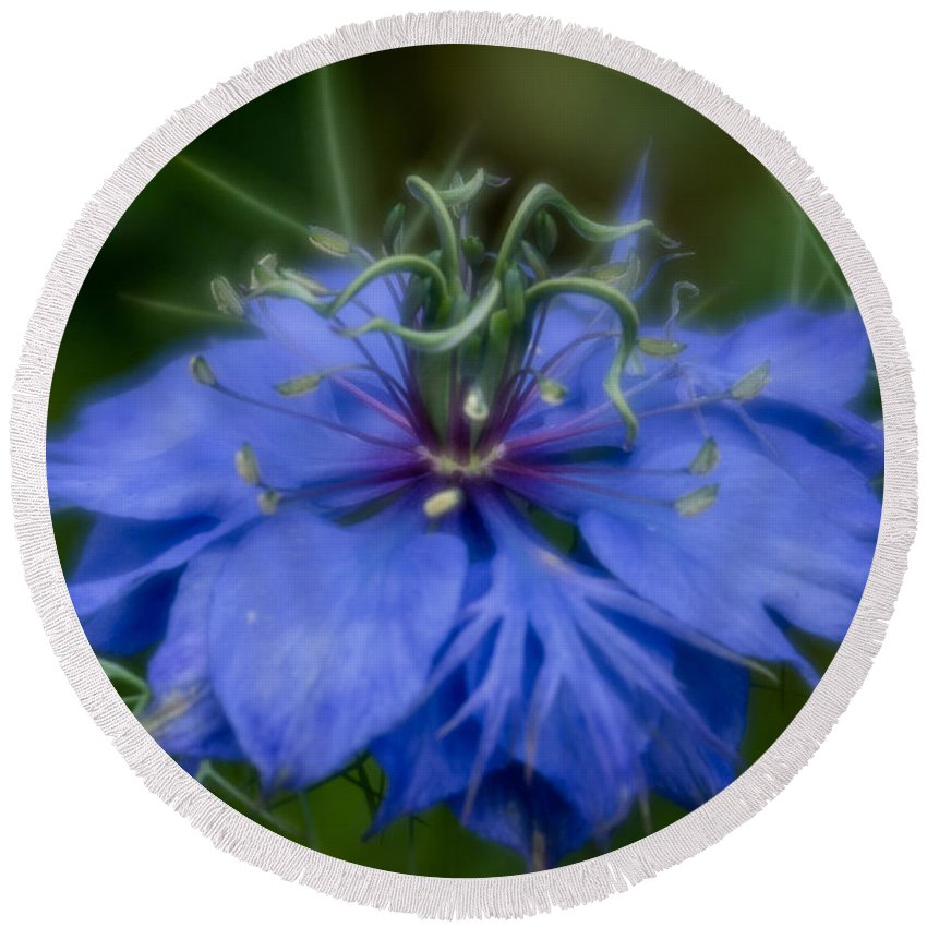 Blue Flower Round Beach Towel featuring the photograph Nigella Damascena by Greg Nyquist