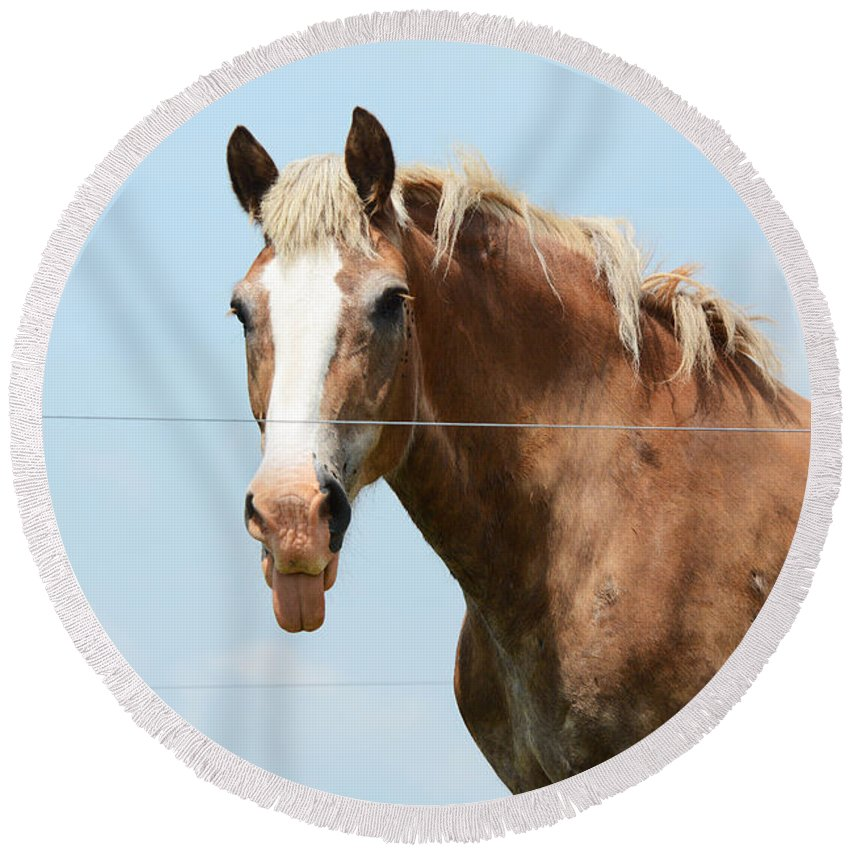 Horse Round Beach Towel featuring the photograph No Manners by Cindy Manero