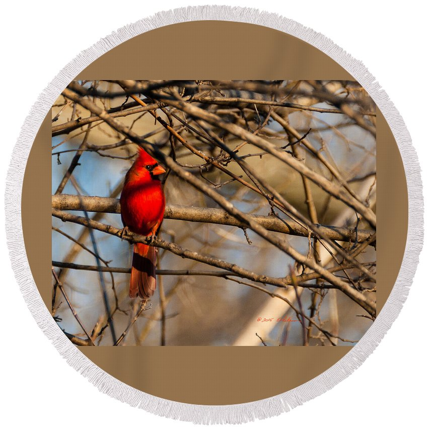 Winter Scene Round Beach Towel featuring the photograph Northern Cardinal by Edward Peterson