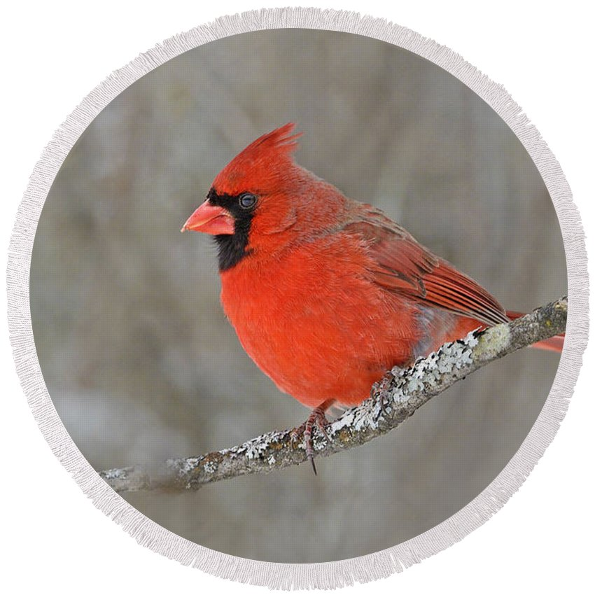 Northern Cardinal Round Beach Towel featuring the photograph Northern Cardinal by Joshua McCullough