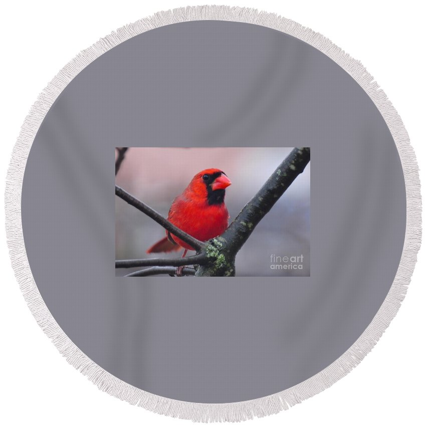 Bird Round Beach Towel featuring the photograph Northern Cardinal by Juanita Doll