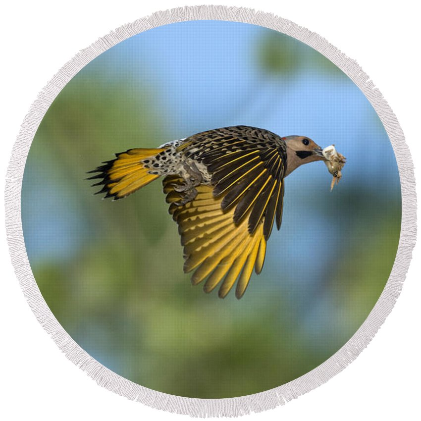 Northern Flicker Round Beach Towel featuring the photograph Northern Flicker by Anthony Mercieca
