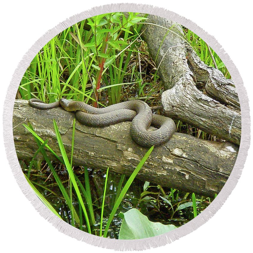 Snake Round Beach Towel featuring the photograph Northern Water Snake - Nerodia Sipedon by Mother Nature