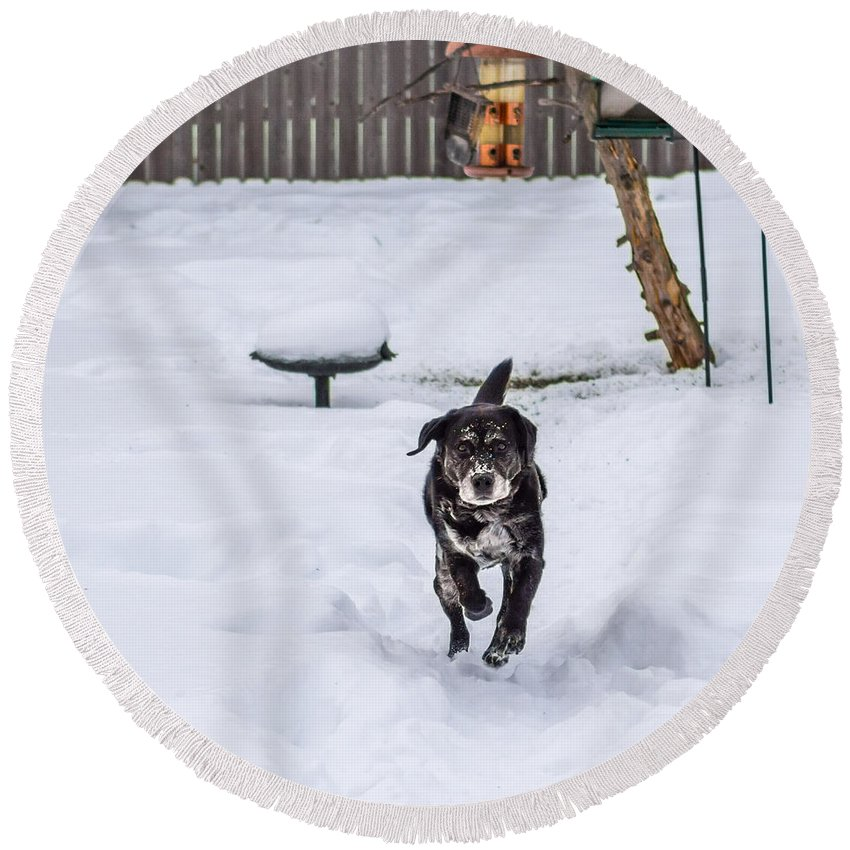 Guy Whiteley Round Beach Towel featuring the photograph Not Lovin' This Snow by Guy Whiteley