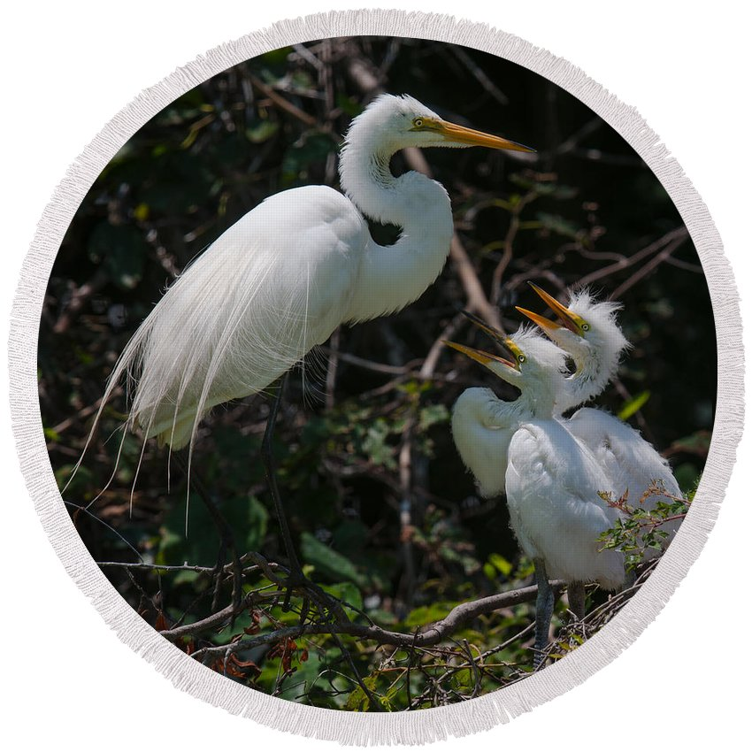 Egret Round Beach Towel featuring the photograph Not Shrimp Again by Dale Powell