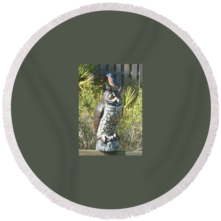 Owl Round Beach Towel featuring the photograph Not Working by Caryl J Bohn