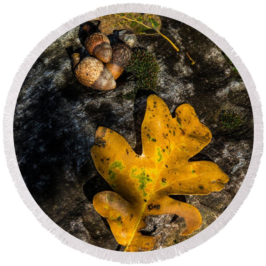 Still Life Round Beach Towel featuring the photograph Oak Leaf And Acorn In Autumn by Mick Anderson