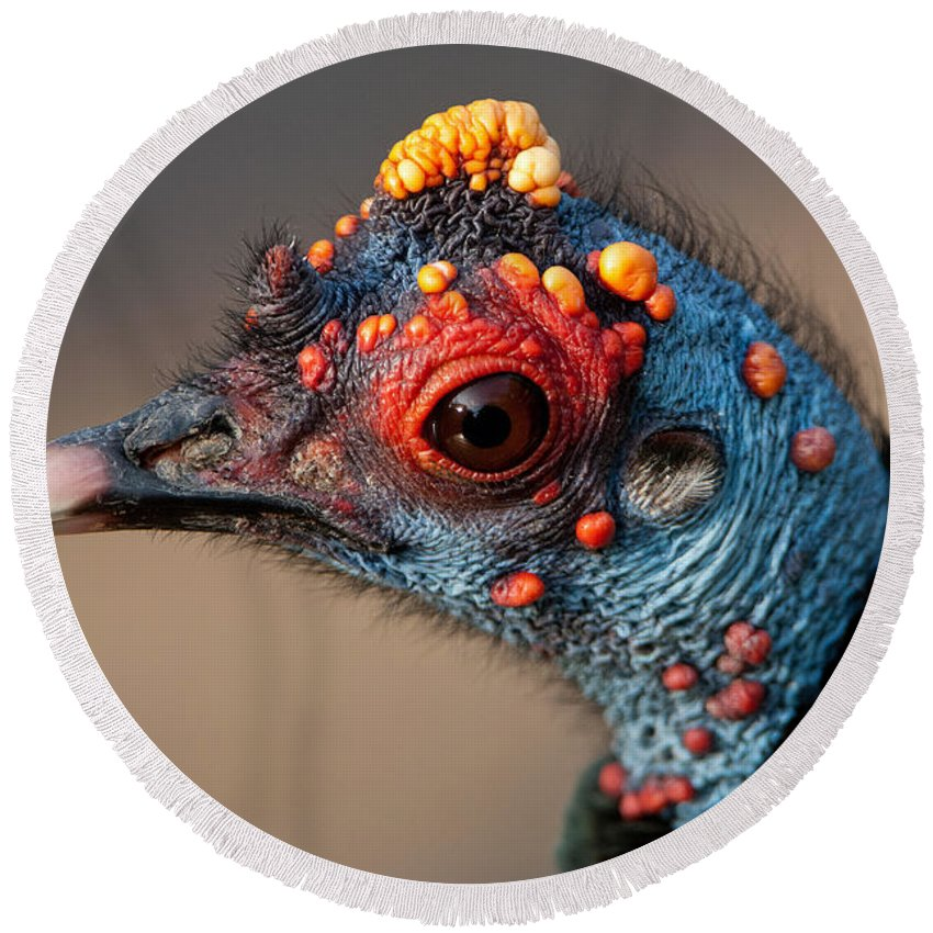 Animal Round Beach Towel featuring the photograph Ocellated Turkey Portrait by Anthony Mercieca