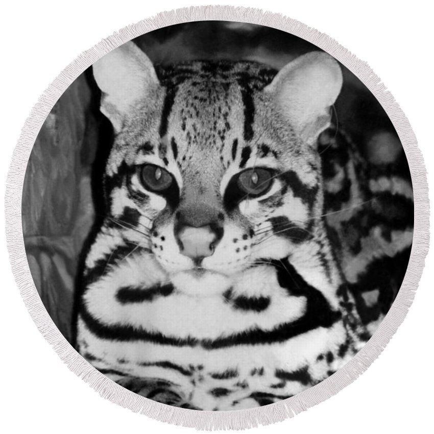 Ocelot In Repose Round Beach Towel featuring the photograph Ocelot In Repose by Ellen Henneke