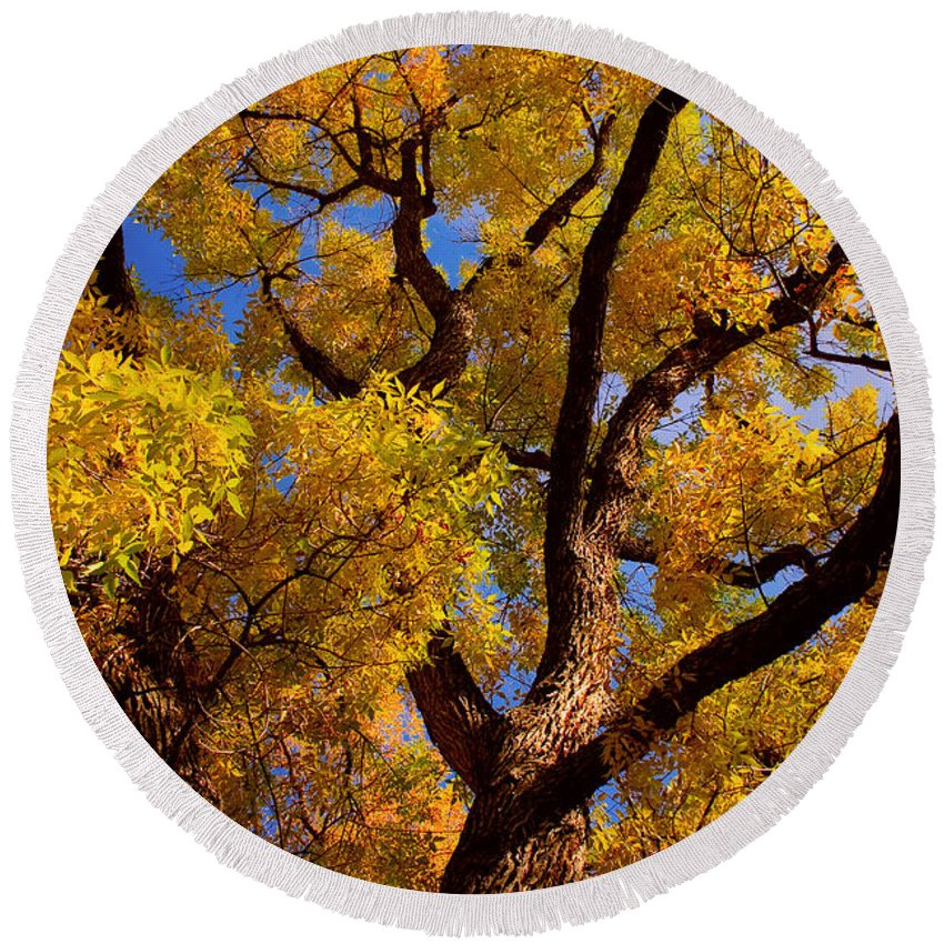 Cottonwood Round Beach Towel featuring the photograph October by James BO Insogna
