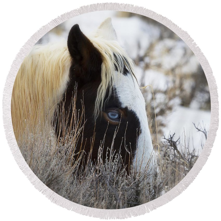 Mccullough Peaks Wild Mustang Round Beach Towel featuring the photograph Old Blue Eyes by Elaine Haberland