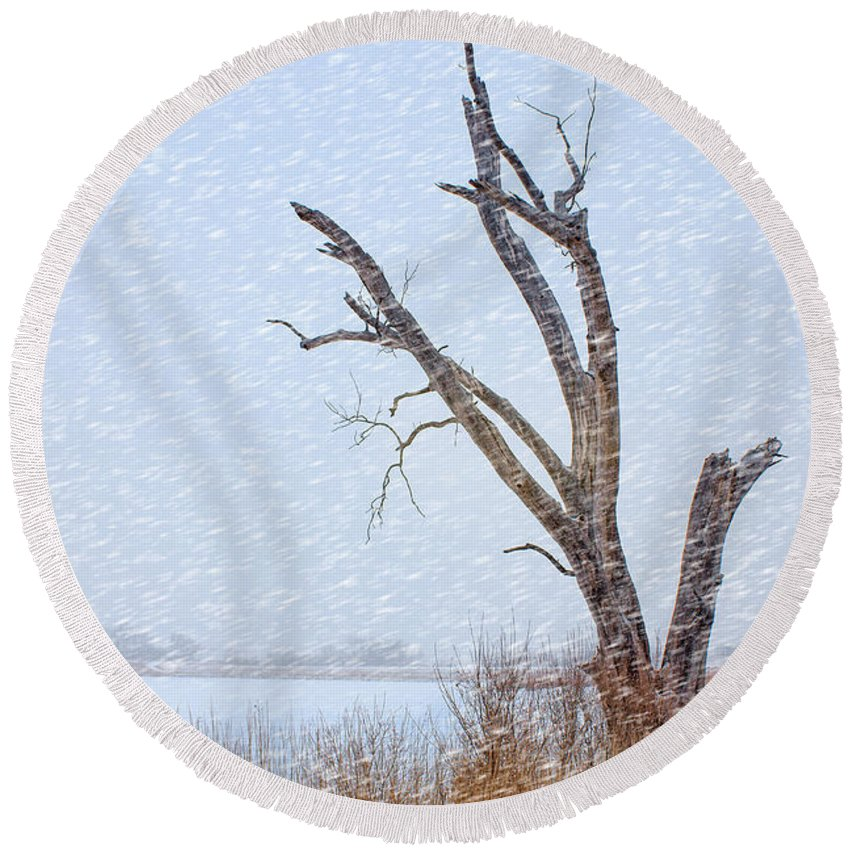 Tree Round Beach Towel featuring the photograph Old Tree In Winter by Nikolyn McDonald