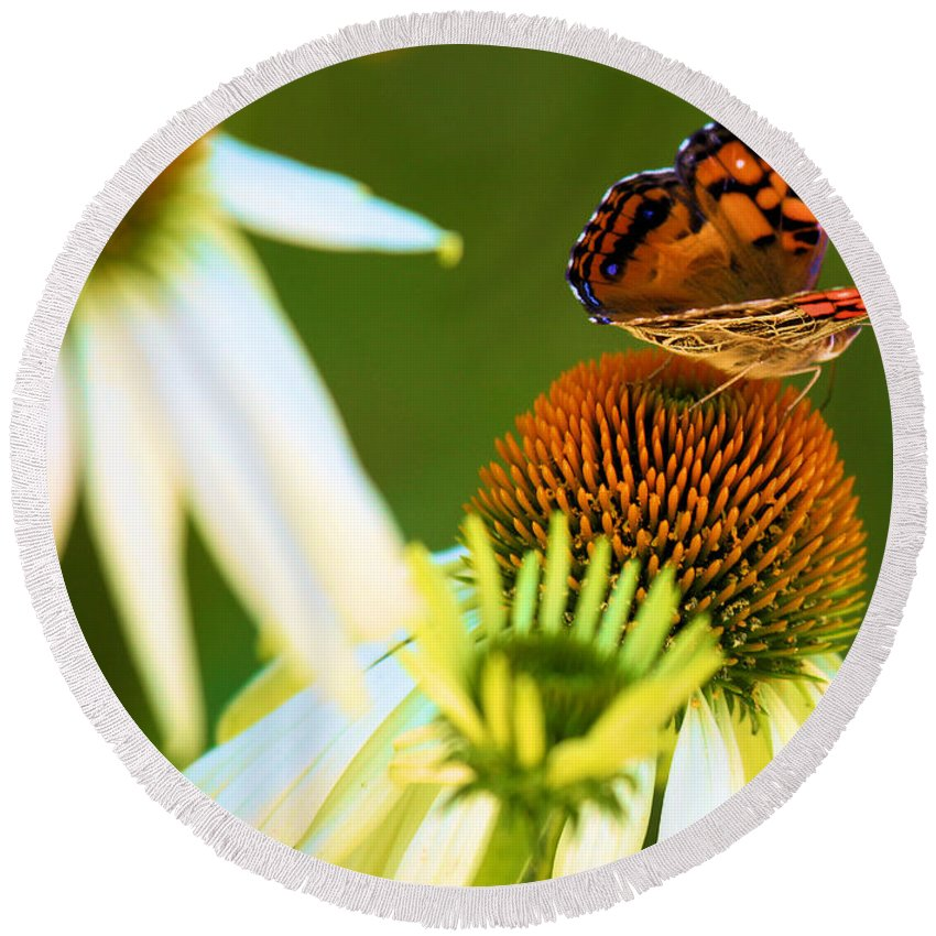 Butterfly Round Beach Towel featuring the photograph On The Edge Of Glory by Adam Jewell