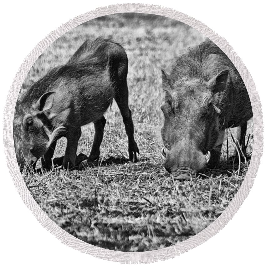 Warthog Round Beach Towel featuring the photograph On The Knees by Douglas Barnard