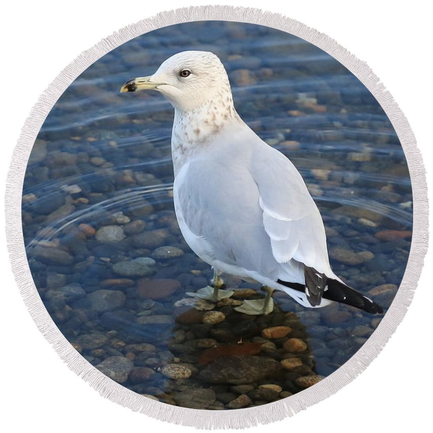 Gull Round Beach Towel featuring the photograph On The Rocks by Carol Groenen