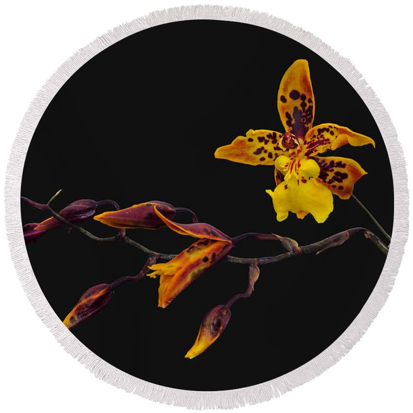 Orchid Round Beach Towel featuring the photograph Oncidium Orchid by Dave Mills
