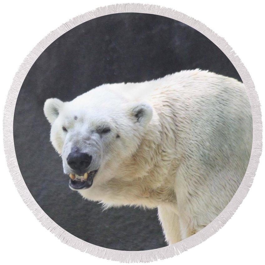 One Angry Polar Bear Round Beach Towel featuring the photograph One Angry Polar Bear by John Telfer