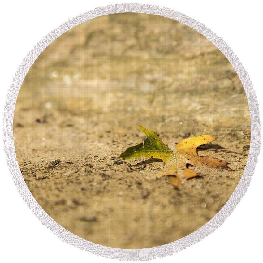 Leaf Round Beach Towel featuring the photograph One Fallen by Karol Livote