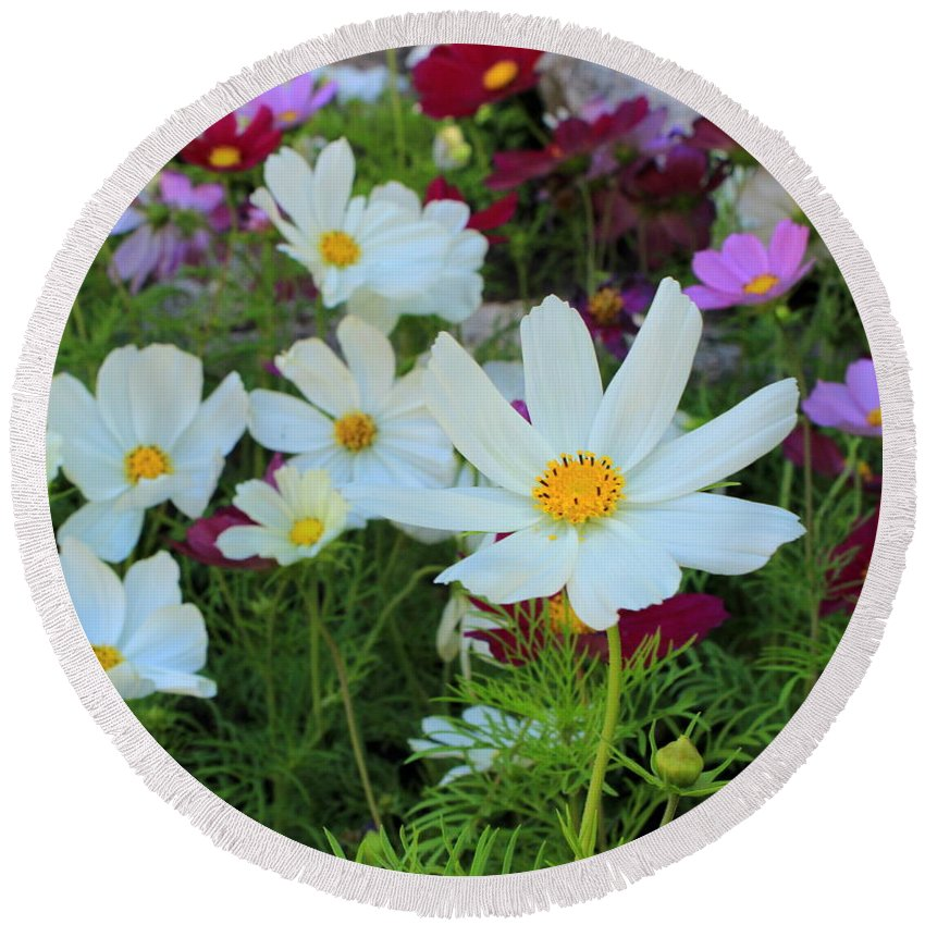 Flowers Round Beach Towel featuring the photograph One Flower Stands Out by Fiona Kennard