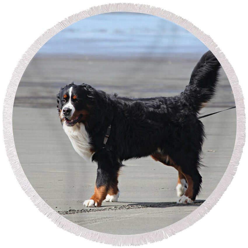 Dog Round Beach Towel featuring the photograph One Happy Boy by Jeanette C Landstrom