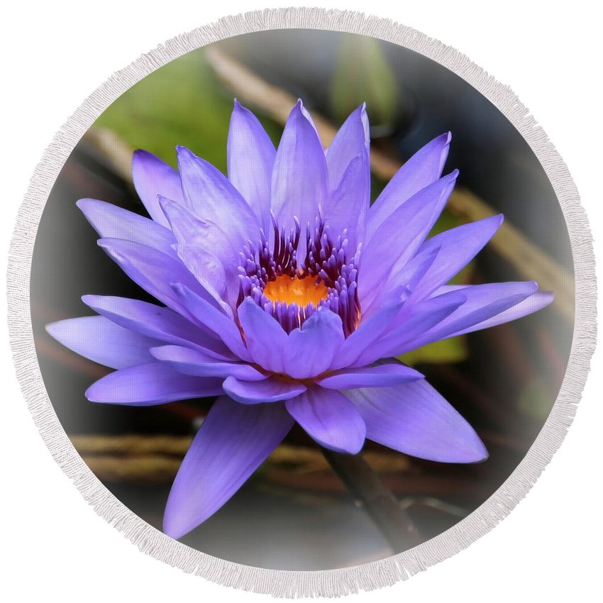 Round Beach Towel featuring the photograph One Purple Water Lily With Vignette by Carol Groenen