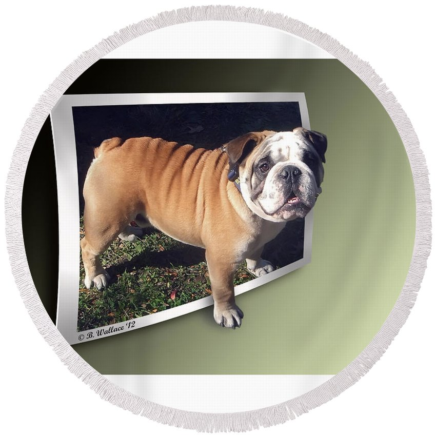 2d Round Beach Towel featuring the photograph Oof Dog by Brian Wallace