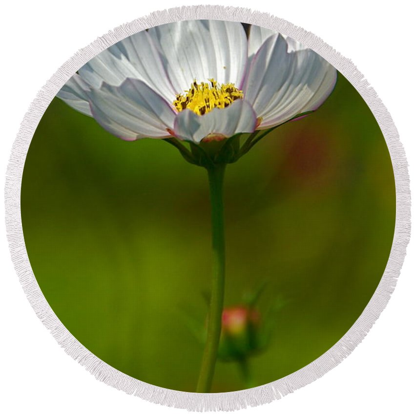 White Cosmos Flower With Bokeh Round Beach Towel featuring the photograph Open For All by Byron Varvarigos
