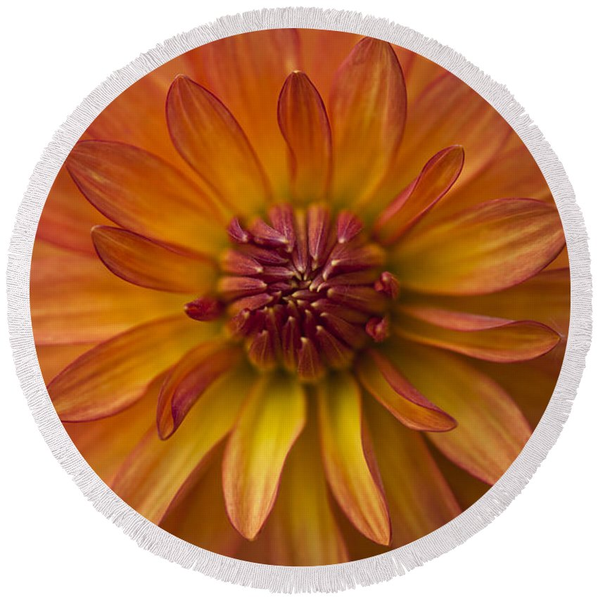 Heiko Round Beach Towel featuring the photograph Orange Dahlia Blossom by Heiko Koehrer-Wagner