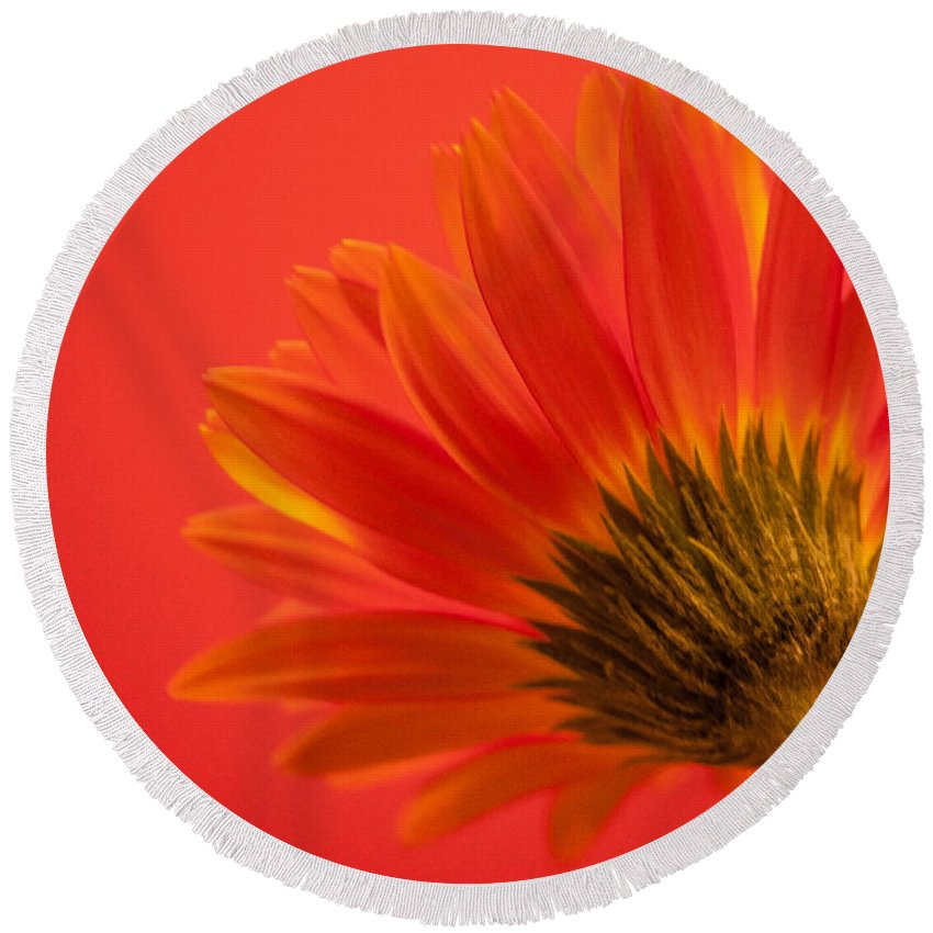 Flower Round Beach Towel featuring the photograph Orange Delight by Bianca Nadeau