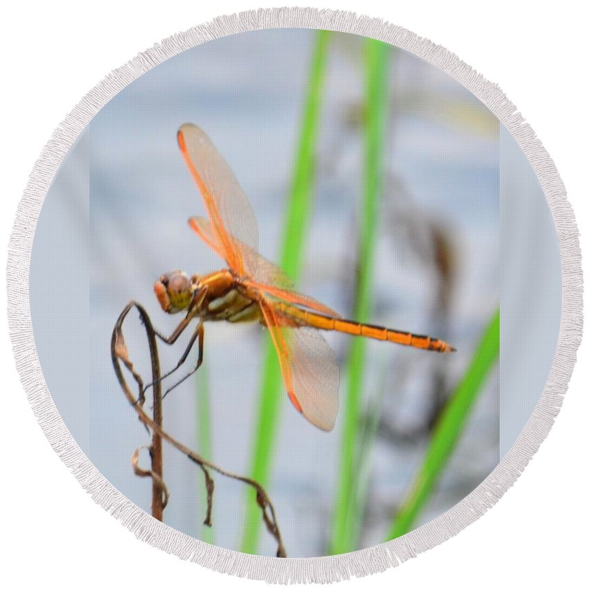 Orange Dragonfly On The Water's Edge Round Beach Towel featuring the photograph Orange Dragonfly On The Water's Edge by Maria Urso