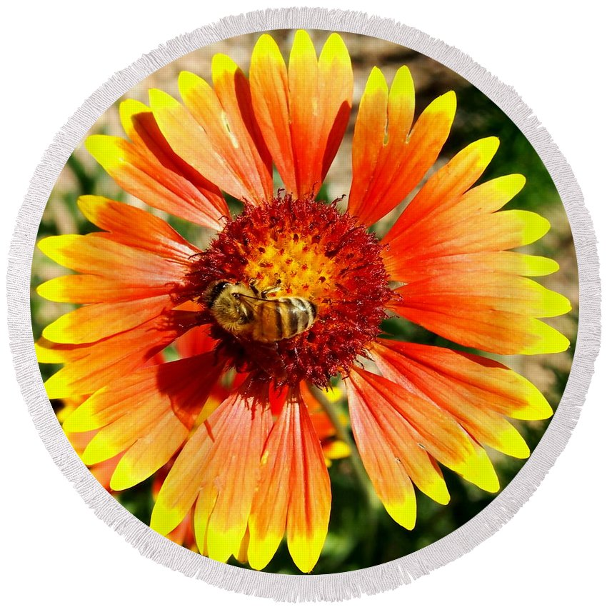Nature Round Beach Towel featuring the photograph Orange Fiery Gaillardia Flower And Bee Macro by Amy McDaniel