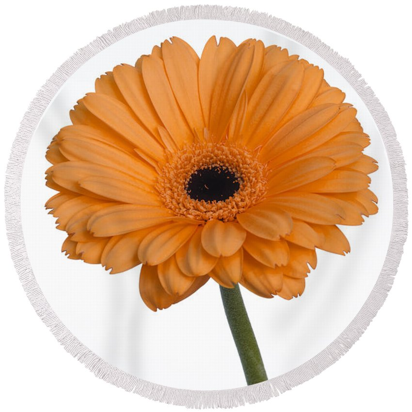 Flowers Round Beach Towel featuring the photograph Orange Gerbera Daisy by K Powers Photography