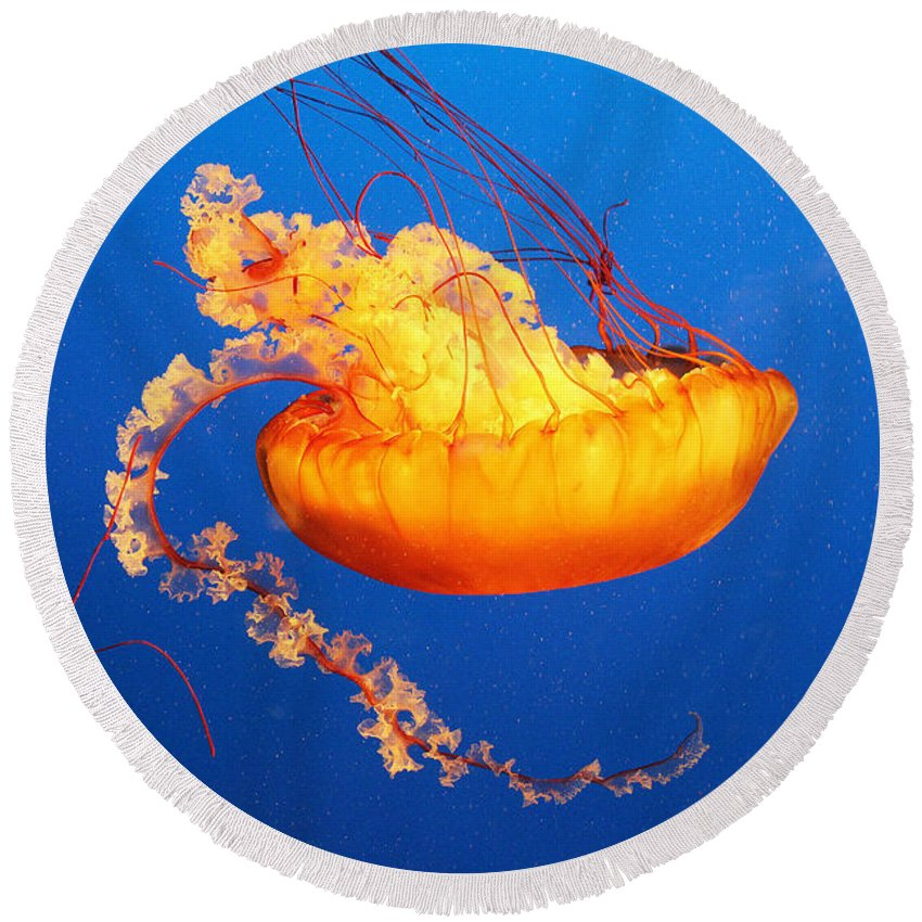 Jellyfish Round Beach Towel featuring the photograph Orange Glow by Kris Hiemstra