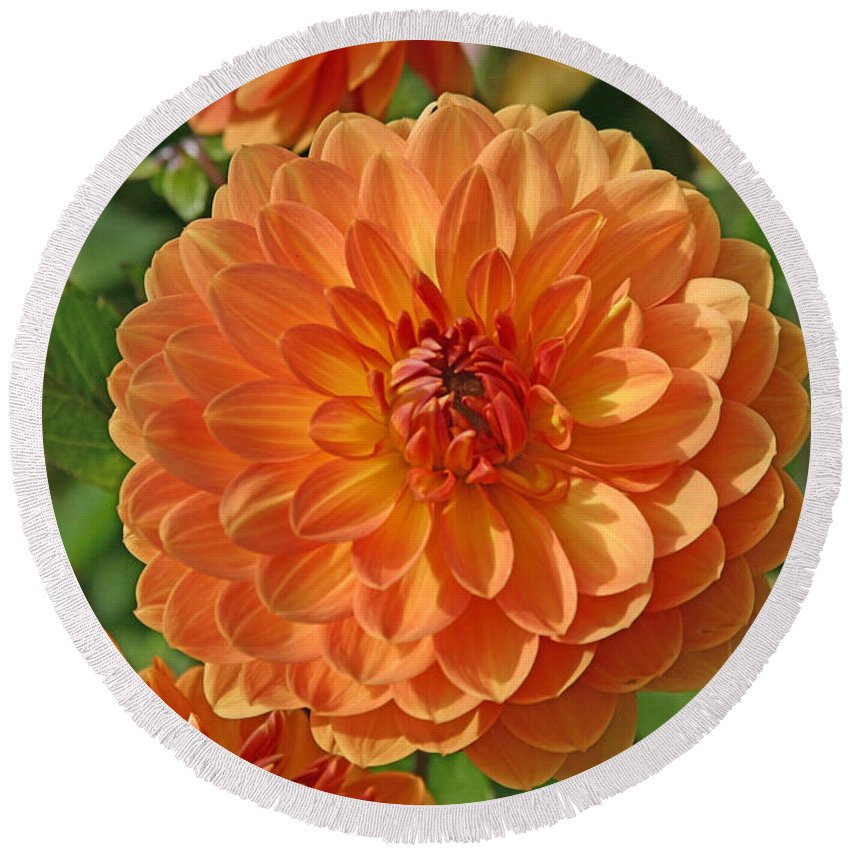 Flowers Round Beach Towel featuring the photograph Orange by Hugh Carino
