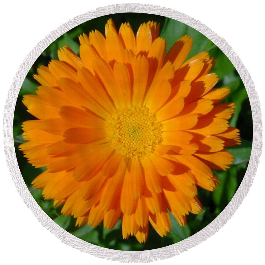 Flower Round Beach Towel featuring the photograph Orange Marigold Close Up With Garden Background by Taiche Acrylic Art