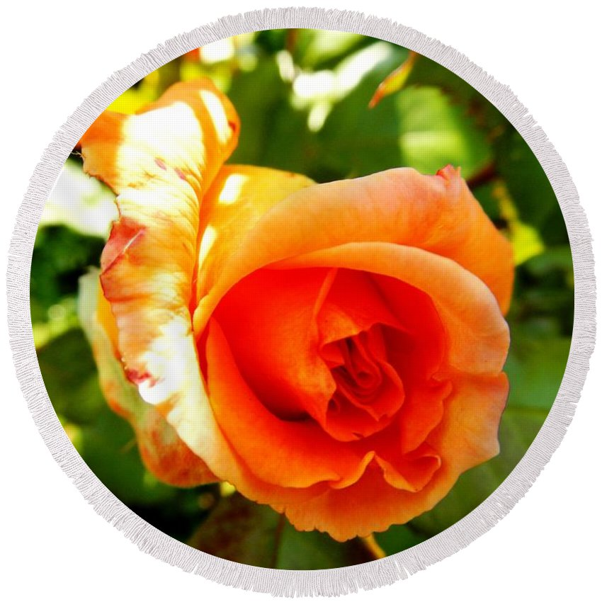 Floral Round Beach Towel featuring the photograph Orange Rose Bloom by Loreta Mickiene