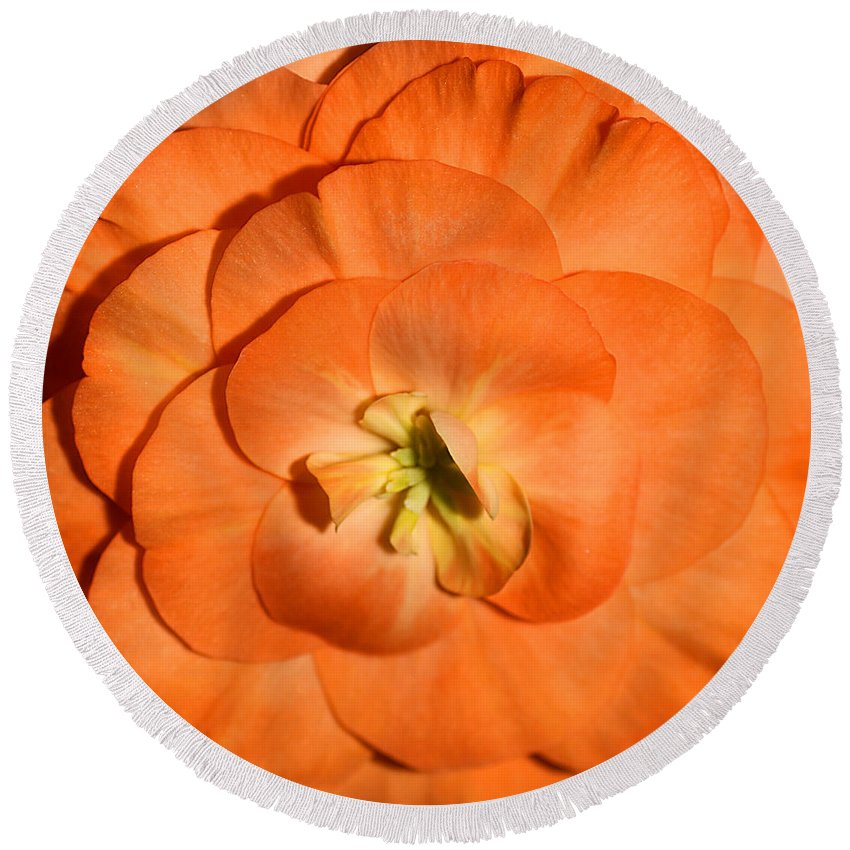 Flowers Round Beach Towel featuring the photograph Orange Tuberous Begonia by Carole-Anne Fooks