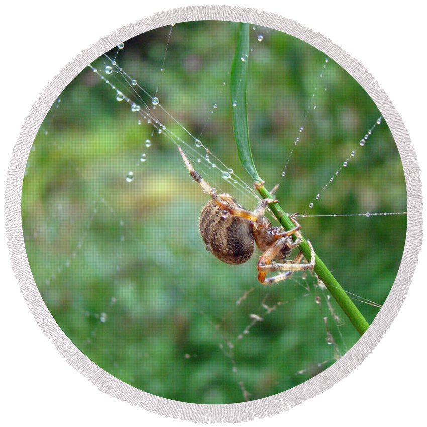 Spider Round Beach Towel featuring the photograph Orb Weaver Spider - Araneus by Mother Nature