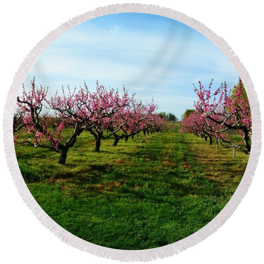 Cherries Round Beach Towel featuring the photograph Orchard In Spring by Michelle Calkins