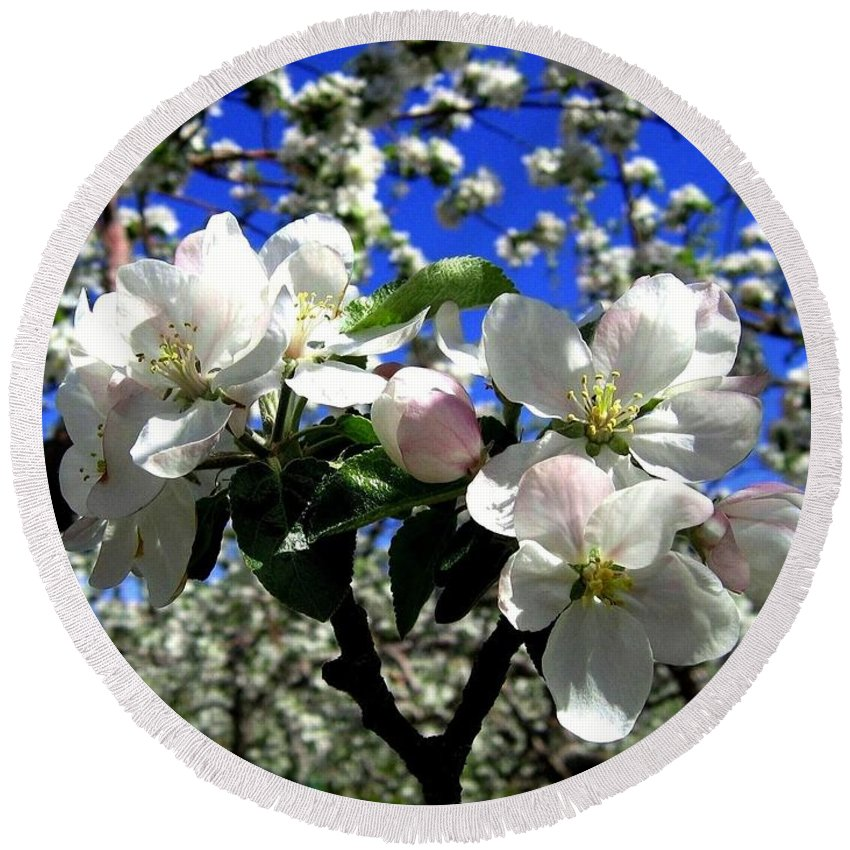 Apple Blossoms Round Beach Towel featuring the photograph Orchard Ovation by Will Borden