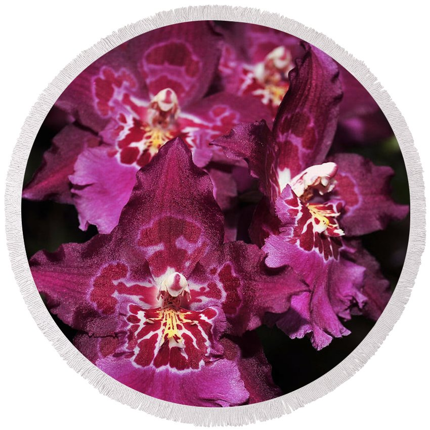 Pink Orchid Round Beach Towel featuring the photograph Orchid Vuylstekeara Aloha Passion by Terri Winkler