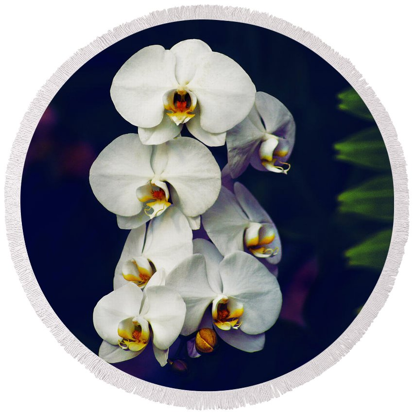 Designs Similar to Orchids 8 by Michael Guirguis