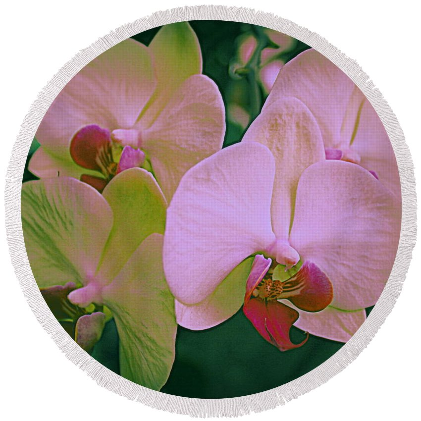 Orchid Round Beach Towel featuring the photograph Orchids In Pink And Green by Dora Sofia Caputo Photographic Design and Fine Art