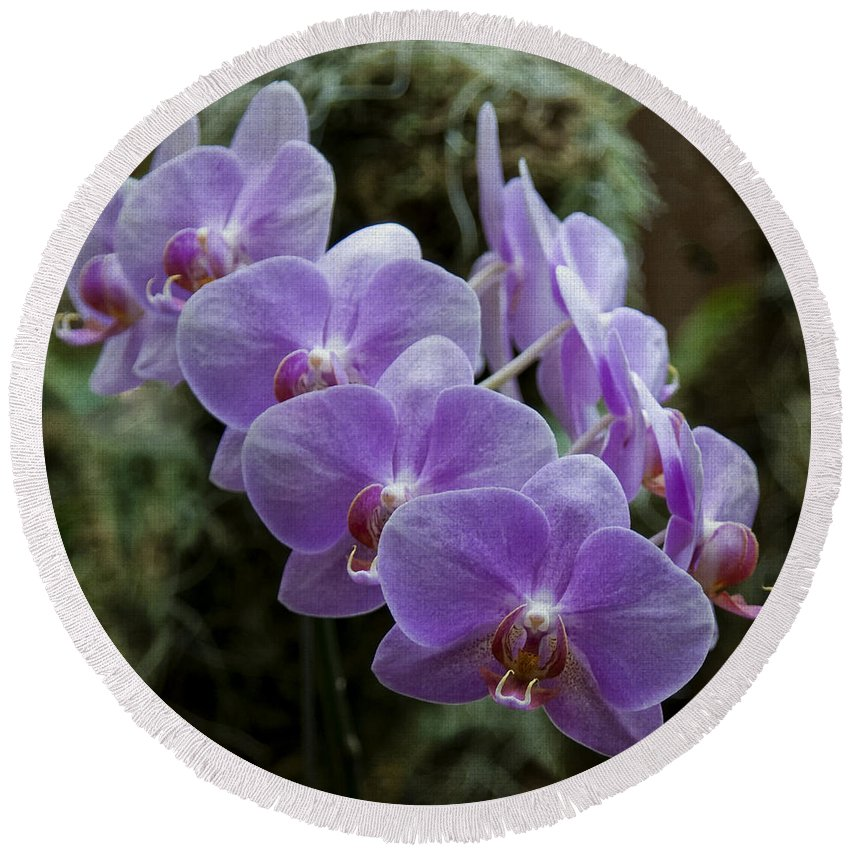 Orchids Round Beach Towel featuring the photograph Orchids Square Format Img 5437 by Greg Kluempers
