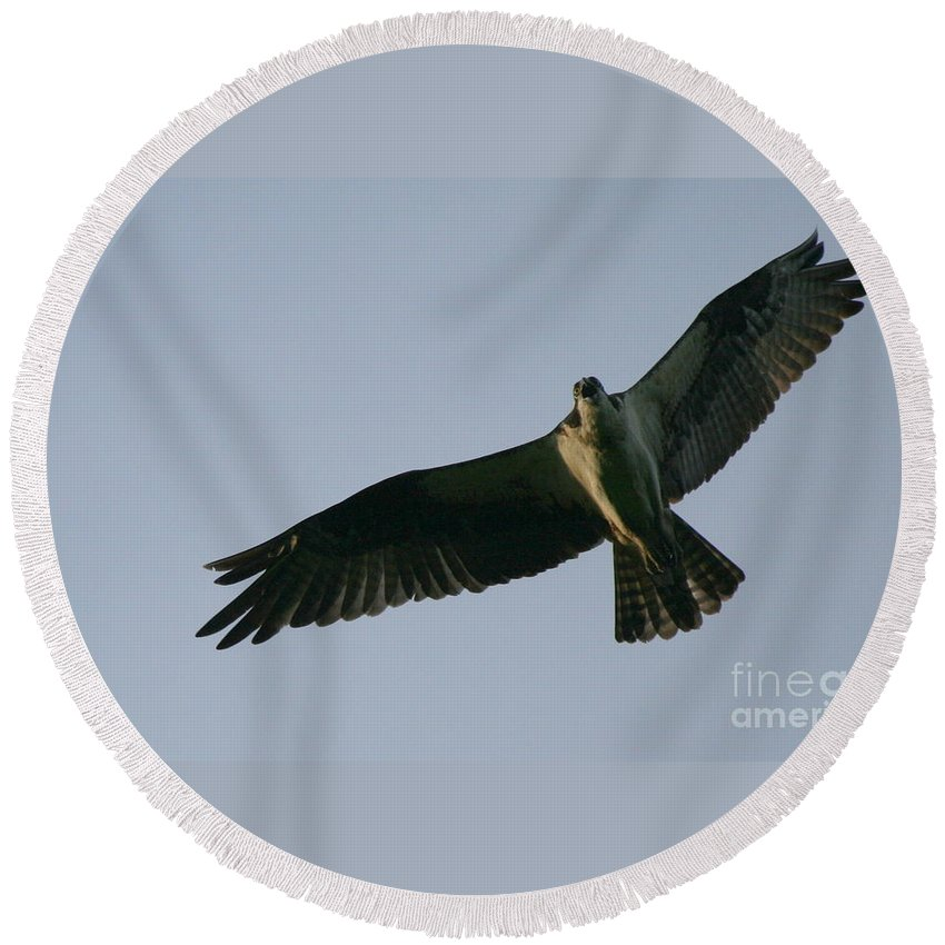 Osprey Art Round Beach Towel featuring the photograph Osprey Above The Androscoggin by Neal Eslinger