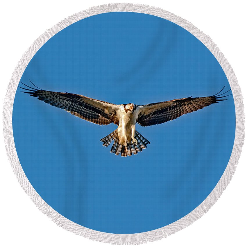 Animal Round Beach Towel featuring the photograph Osprey Hovering by Anthony Mercieca