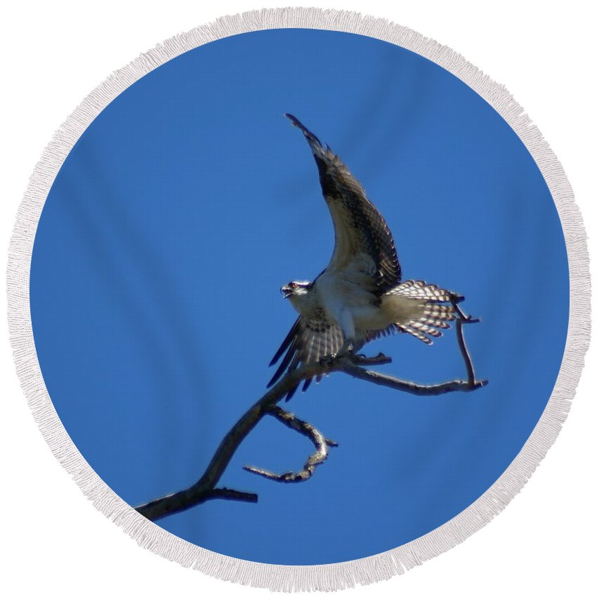 Birds Round Beach Towel featuring the photograph Osprey In Flight 2 by Ben Upham III